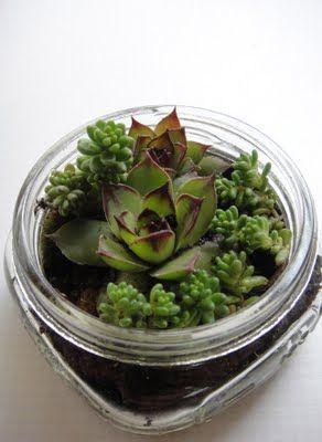 Mini succulent terrarium in a jelly jar