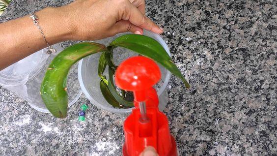 UTI Para Orquídeas - Esclarecendo Dúvidas Siga-me nas redes sociais: Facebook: www.facebook.com/floreseartebyroseamaral Instagram: roseorquideas Contato Asse...