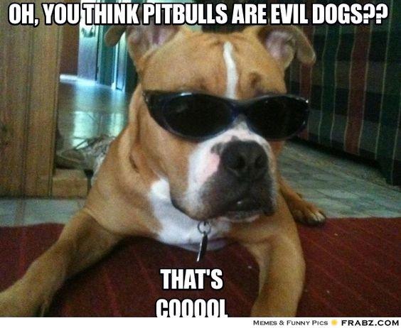 Funny Dog Meme Generator : Hmmmm pitbull dontjudge ilovedogs certapet