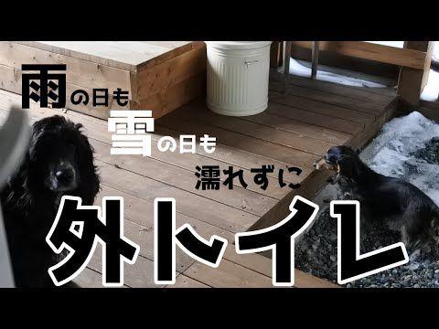 便利すぎる犬用外トイレはこうなってます Youtube 犬 ペットと暮らすインテリア 猫と暮らす