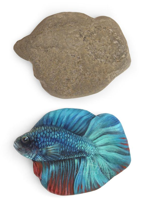 Multicolored Betta Fish Hand Painted on an Incredibly Shaped Sea Rock! Please…