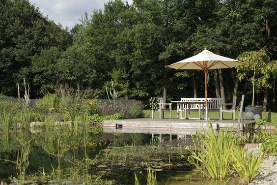 Pflanzen in den verschiedenen Teichzonen sorgen für eine gute Wasserqualität.