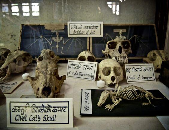 Natural History Museum Kathmandu (© Elsbeth Vorstenbosch, 2014).