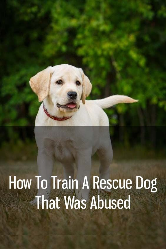 How To Train A Rescue Dog That Was Abused Dogbraintraining