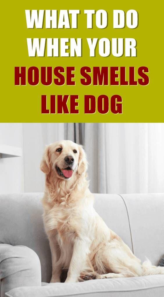 Pin On Dog Tips Tricks