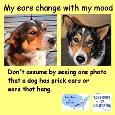 Remember Appearances Can Be Deceiving Don T Assume By Seeing One Photo That A Dog Has Up Ears Or Ears That Hang Losing A Dog Dogs Losing A Pet