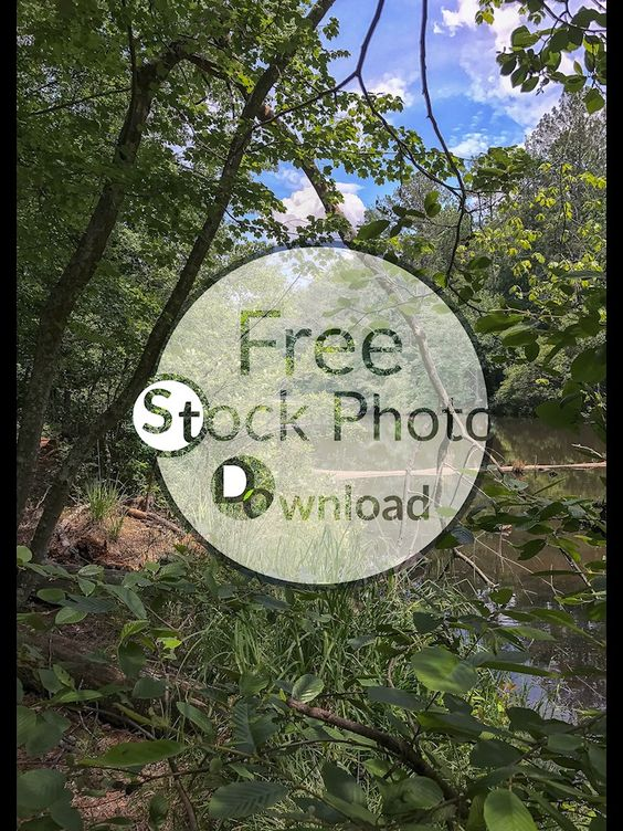 Download Free Photo - Free and Public Domain Stock Photo Download