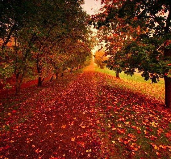 Fall is my favorite season!