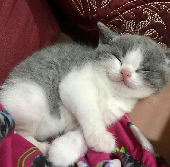 Cutest gray and white kitten I've seen so far today.