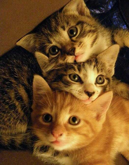 It S All In The Eyes 12th July 2019 Cute Animals Kittens Cutest Cats And Kittens