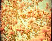 Love this guys nature photos.  Beautiful colors...