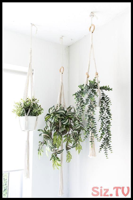 37 Ideen F R H Ngende Innenpflanzen Zur Dekoration Ihres Zuhauses