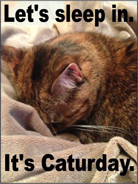 happy caturday - Google Search: