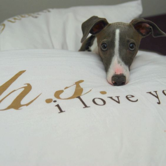 I want this bed cover (and the doggy)  http://www.HeartCoreWomen.com