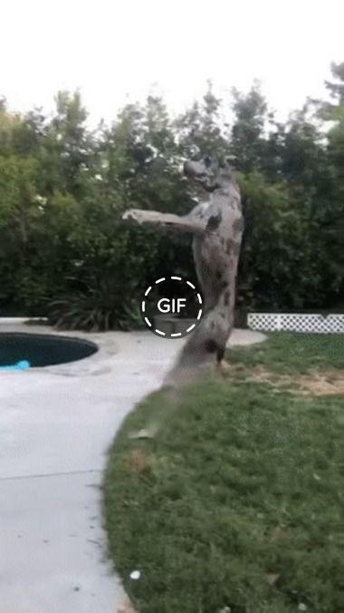 foi pular e caiu