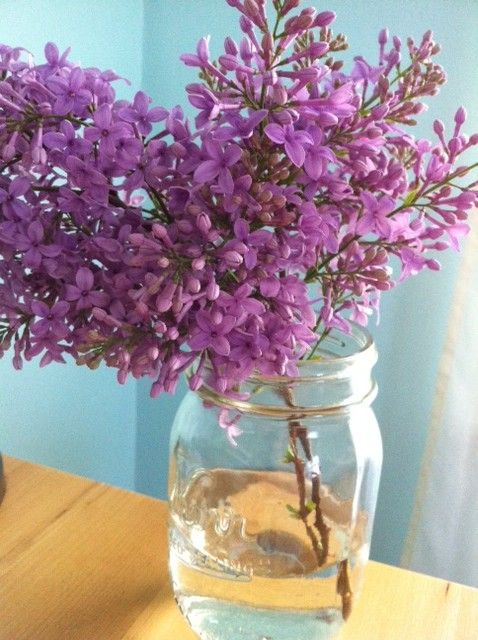 my spring/summer resolution is to cut more flowers from the yard to enjoy inside- these lilacs (which I have been replacing every 2 days-ish) are making me very happy