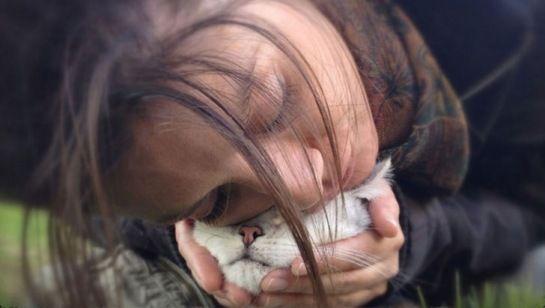 12 divertidas razones por las que deberías adoptar un gato   LikeMag