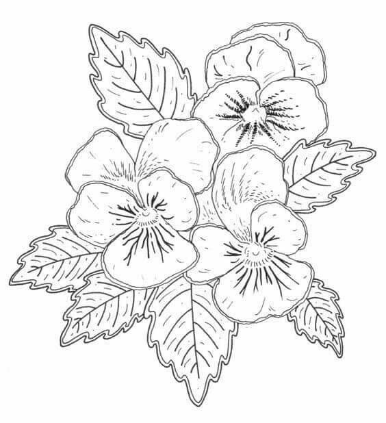 Pin By Nahid Hashemi On پترن Pansies Coloring Pages Painting
