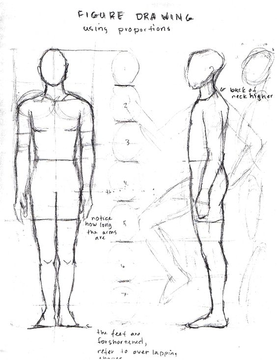 figure drawing proportions worksheet Google Search – Proportions Worksheets