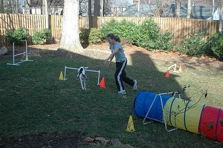 Make your own dog agility course