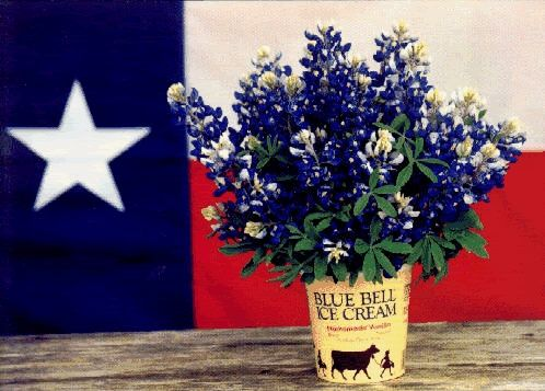 "Texas Bluebonnet "" sightings "" website..for your springtime travels. http://www.texasbluebonnetsightings.com"