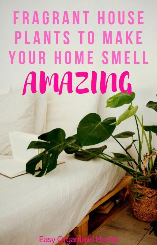 Put These Fragrant Indoor House Plants In Your Home For It To Always Smell Amazing Find 10 Great Smelling Plants Th In 2020 House Smell Good House Plants House Smells