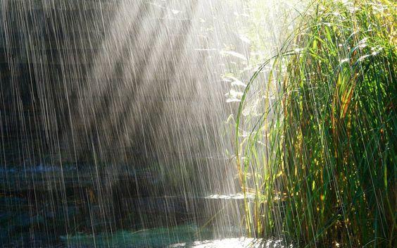 - Chuva/água/vida/verde -