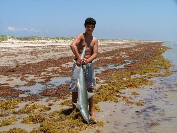 Port aransas texas port aransas beach shark fishing for Fishing port aransas