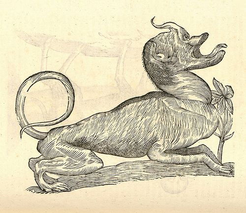 "Canis monstroso capite ""Ulissi Aldrovandi (Aldrovandus) (1522-1605)   Woodcut illustrations from Aldrovandi's 'History of Monsters'"