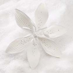 "3.5"" Stargazer Lily - Large - White (12 per box)"