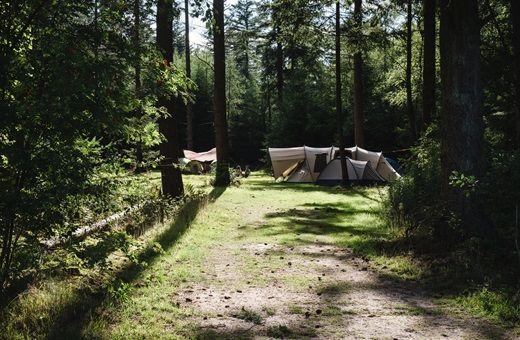 Kom logeren bij de boswachter