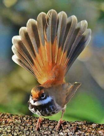 Природа. #smallbirds (1) Maravilhas da natureza 3 Vídeo do Instagram - Фото