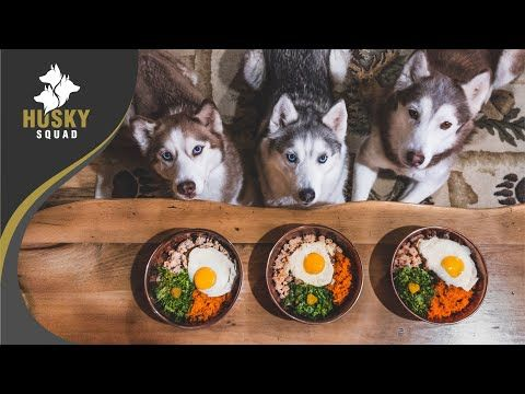 Home Made Dog Food Recipe Turkey And Eggs Husky Squad Youtube