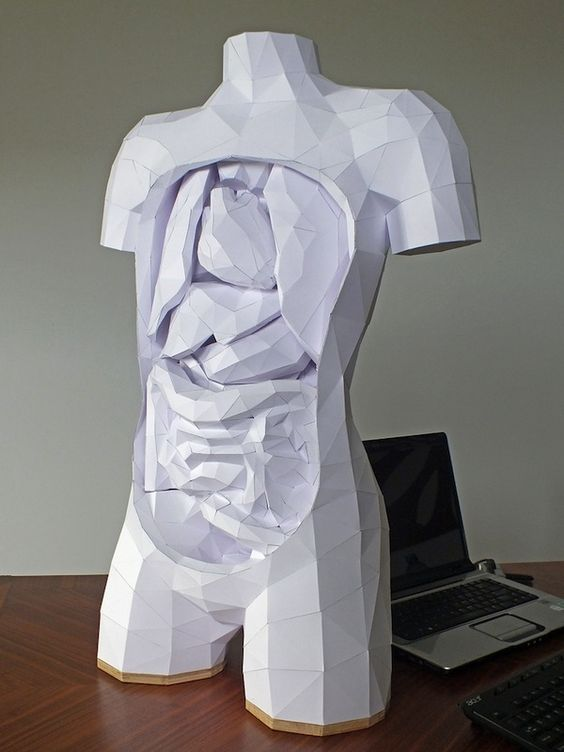 Paper Torso with Removable Organs