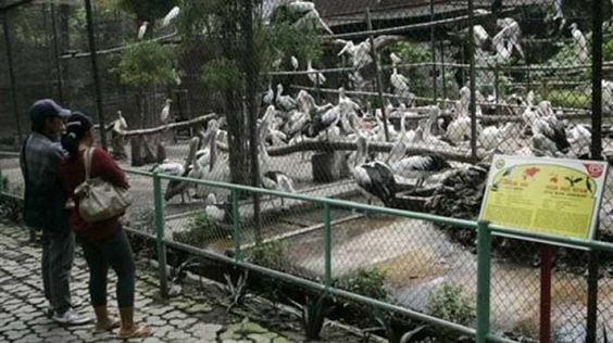 'Zoo Of Death' in Indonesia shows shocking animal cruelty! Here's why it needs to be shut down | Latest News & Gossip on Popular Trends at India.com. Cages for birds are too small and overcrowded