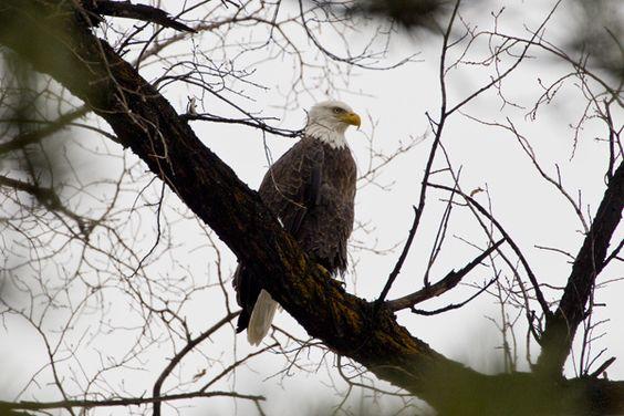 I love Eagles!
