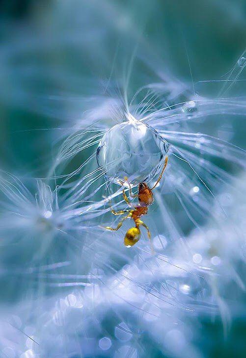 Sundiamonds of Life — our-amazing-world: f a r m l i f e Amazing World...
