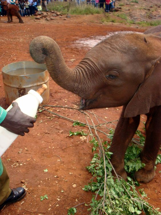 Most gorgeous photo of an elephant feeding. Photo from: http://www.mappingmegan.com/gusto-and-gecko/