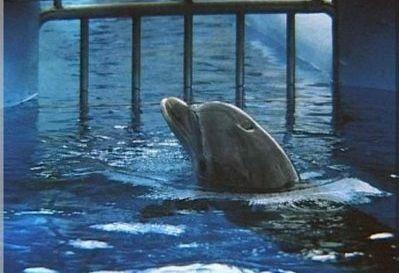 Que la construction d'un delphinarium au ZooParc d'Amnéville (57) ne voie jamais le jour. http://www.change.org/petitions/que-la-construction-d-un-delphinarium-au-zooparc-d-amn%C3%A9ville-57-ne-voie-jamais-le-jour?share_id=PwRalaQQDX&utm_campaign=autopublish&utm_medium=facebook&utm_source=share_petition #SeaShepherd #defendconserveprotect
