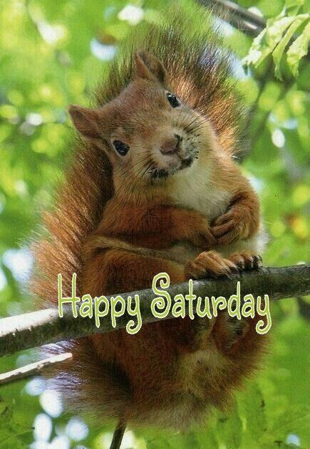 Image result for saturday squirrel images