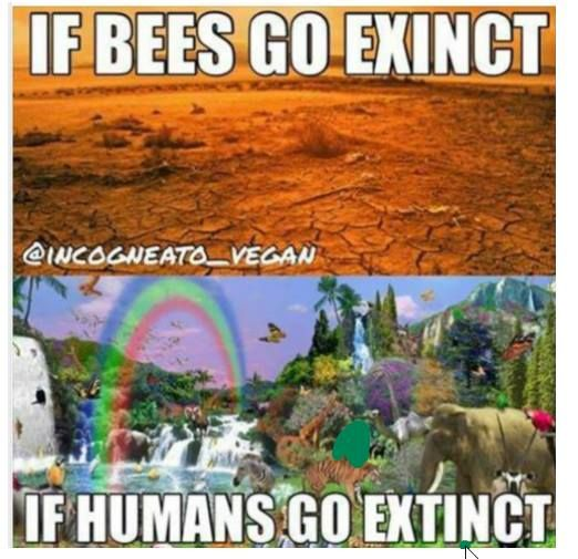 If Bees Go Extinct In 2020 Save Our Earth Funny Pictures Pictures
