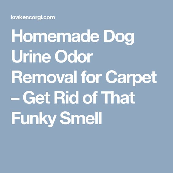 Homemade Dog Urine Odor Removal For Carpet