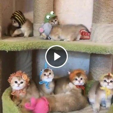 Gatinhos filhotes muito fofos.