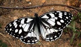 """""""...cuando quieras desear felicidad y convertir tus deseos realidad, susurra a una mariposa tu petición y entrégale la libertad. Agradecida con tu deseo volará y la alegría y el amor te traerá… ...Mariposas, a volar!!!"""""""