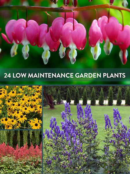 Low maintenance plants plants and garden pests on pinterest for Hearty low maintenance plants