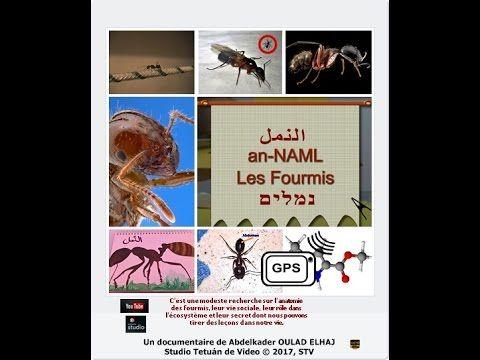The Ants A Documentary By Abdelkader Oulad Elhaj Fourmis Documentaire