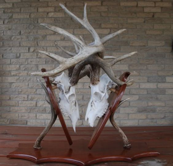 Deer Mounts Deer And Medium On Pinterest