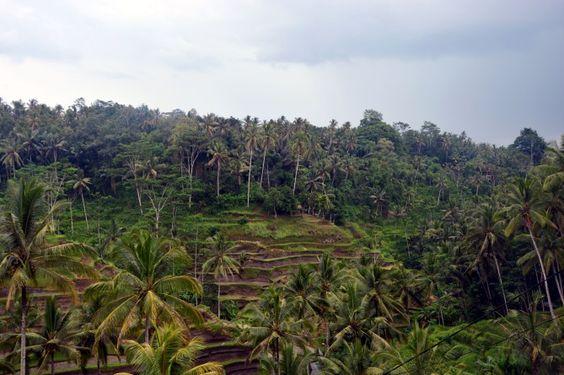 Tegalalang Rice Terrace View Top