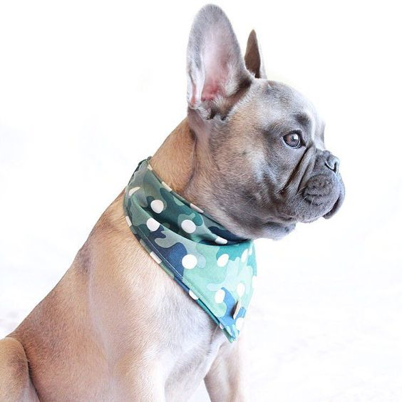 Saved you a spot bae.   Bandana by: @roverboutique by littleenzo_the_frenchie
