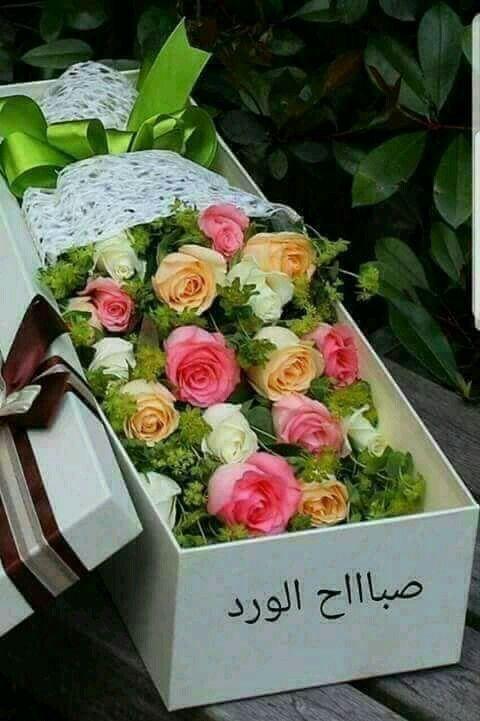 صباح الورد Good Morning Images Flowers Good Morning Arabic Good Morning Greetings